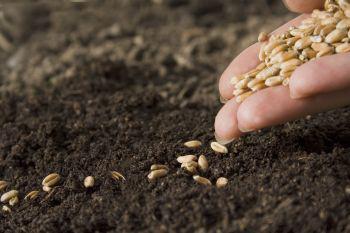 Tápanyag gazdálkodási terv készítése
